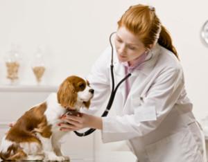 Ветеринарные услуги в Сочи