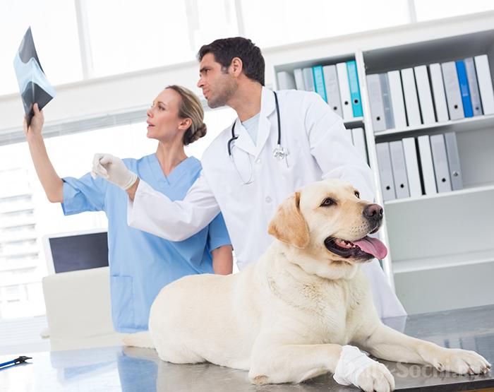 Ветеринарные клиники Сочи
