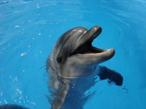 дельфинарий в Сочи