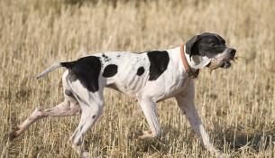 Купить собаку в Сочи