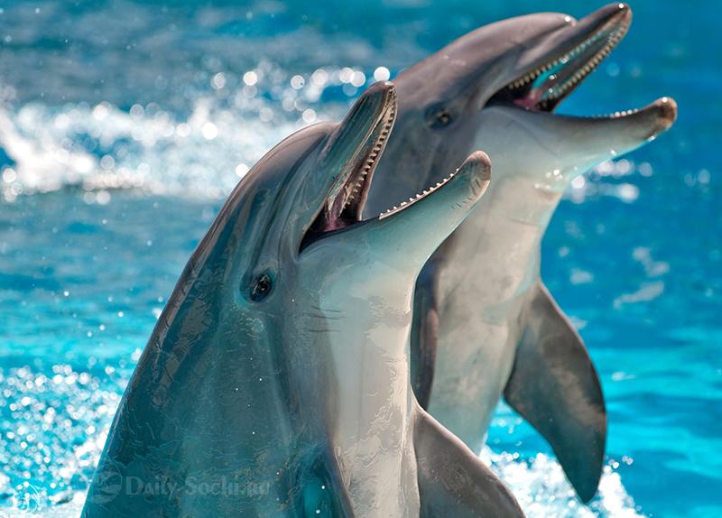Все дельфинарии Сочи