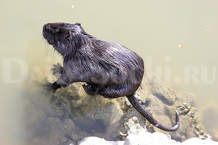 Сочинский дендрарий фото