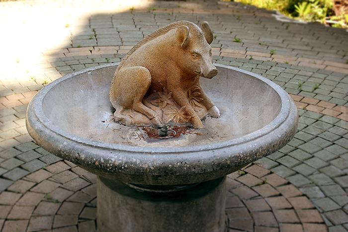 Парк Ривьера в Сочи: фонтан со свинкой