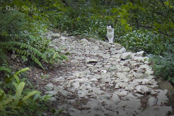 Домашний кот посреди леса