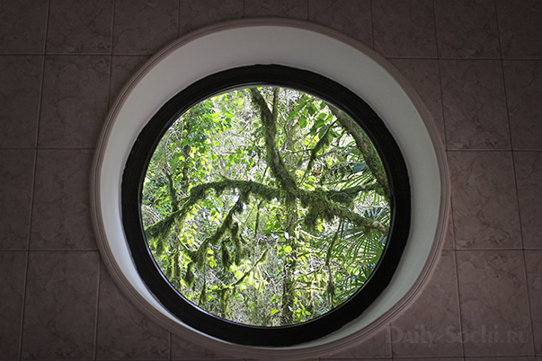 Окно в туалете в тисо-самшитовой роще