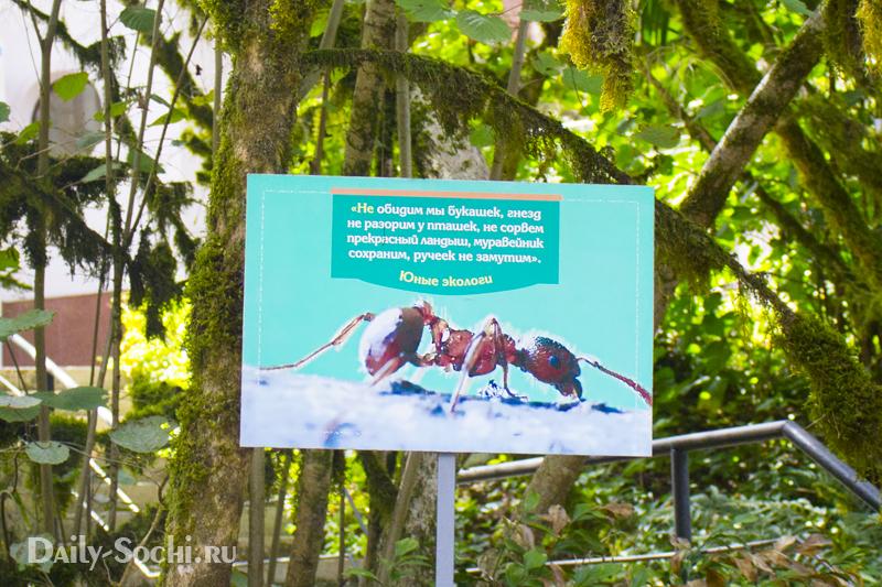 Табличка юных экологов в тисо-самшитовой роще в городе Сочи