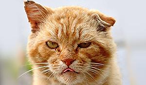 Уличный кот НЕ из Сочи