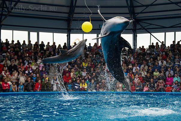 Дельфинарий в Сочи Парке