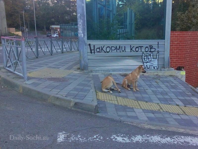 Вот такие кошки в Сочи на улице Фабрициуса