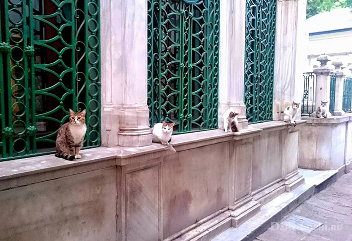 Кошки в Сочи