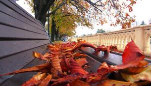 Осенний Сочи ФОТО