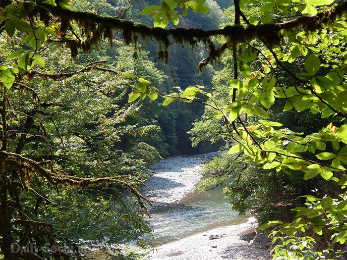 в реку Сочи впадает ручей Сванидзе
