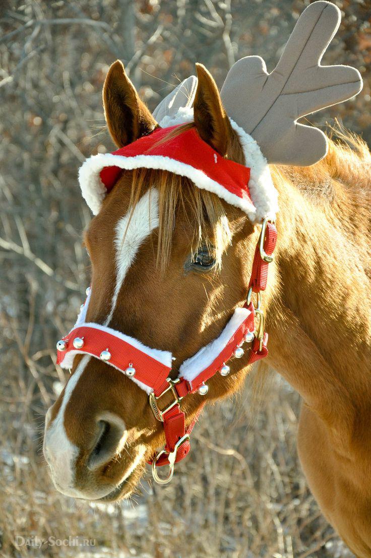 Даже обычная лошадь в наряде выглядит рождественским оленем :)