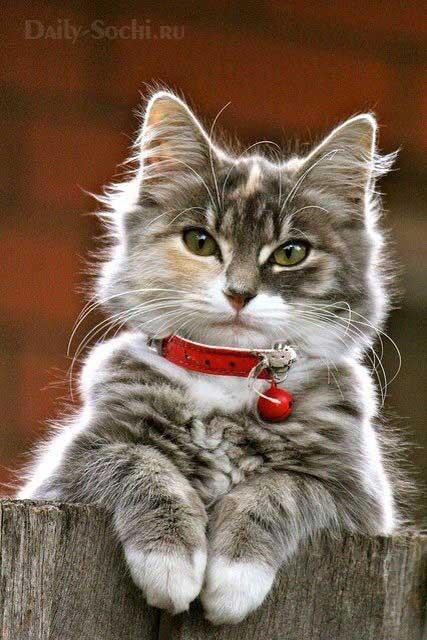 Новогодний ошейник для кота