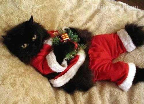 Кот в костюме Санты