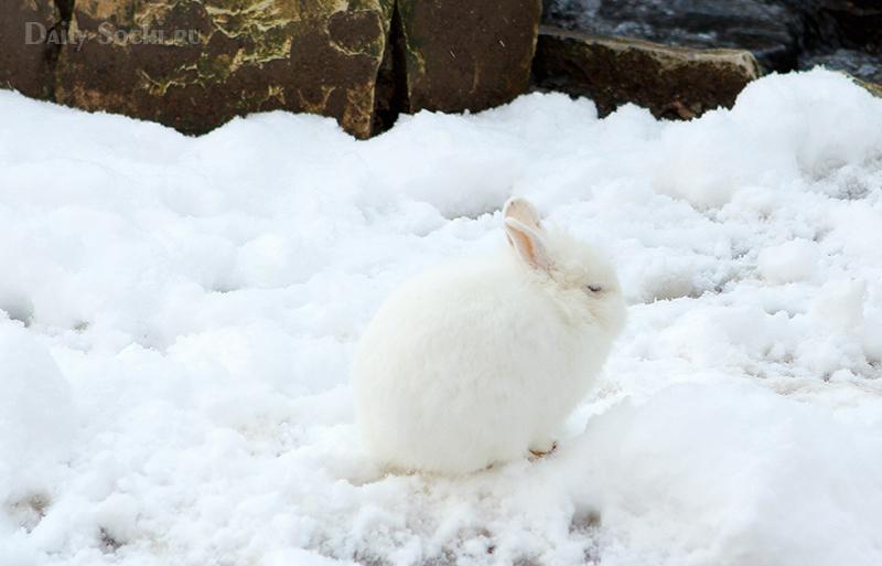 Белый заяц на белом снегу