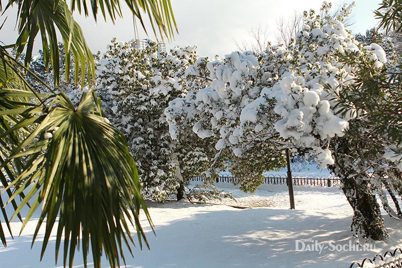 Дендрарий Сочи зимой не уступает по красоте дендрарию летом