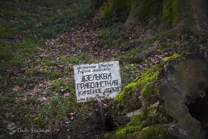 Информационная табличка возле дерева