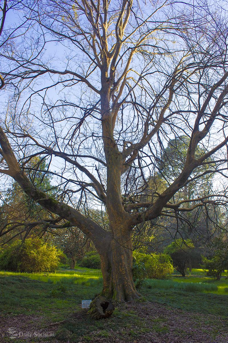 Каменное дерево возвышается над просторной опушкой с правой стороны парка.