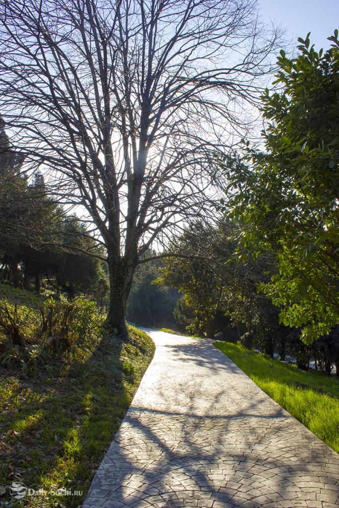 Громадные деревья можно увидеть на каждой аллее парка