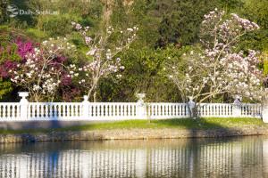 Берега водоёма окружены цветущими деревьями