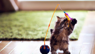 Купить котёнка в Сочи