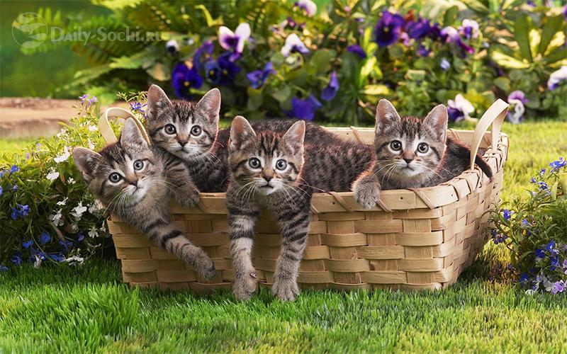 Котята в Сочи, котята в корзине, котята на траве