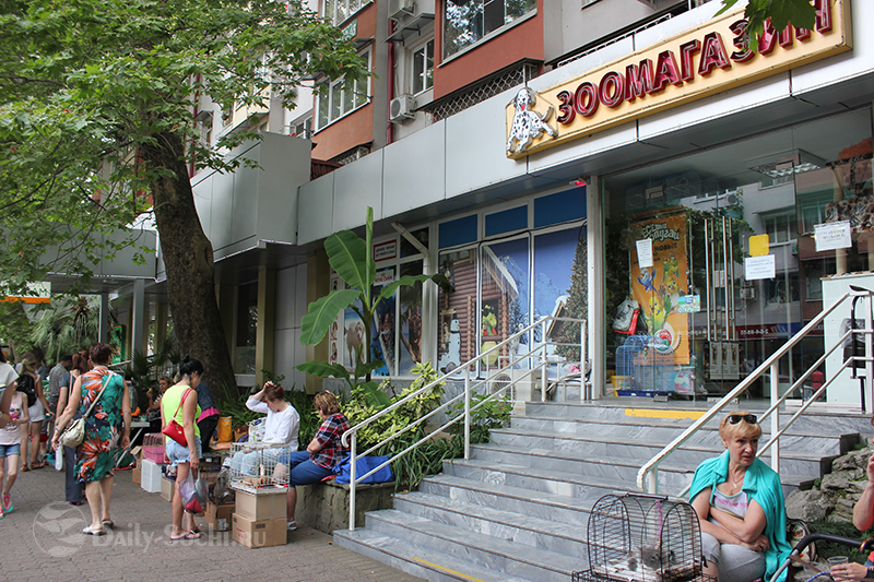 Стихийный рынок животных в Сочи на улице Воровского