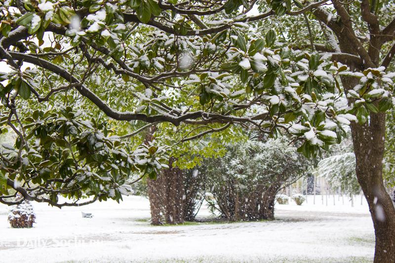 Магнолия в снегу