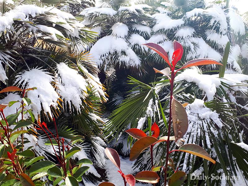 Пальмы в снегу