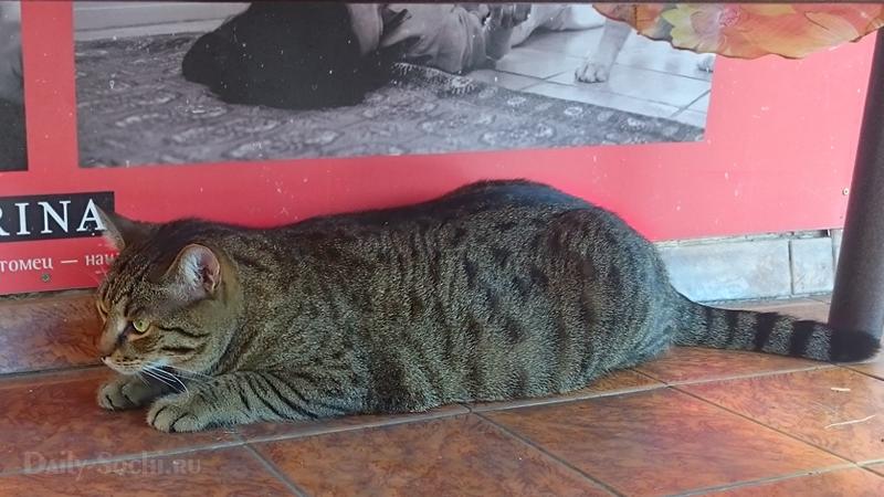 Один из приблудившихся к клинике котов