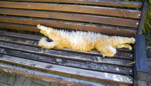 Кот на лавочке у цирка - самый счастливый кот в мире