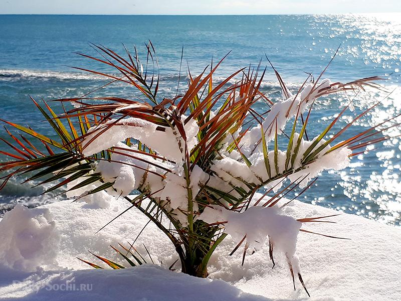 Пальма в снегу на фоне моря
