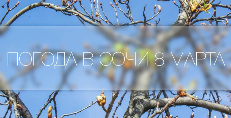Погода в Сочи 8 марта