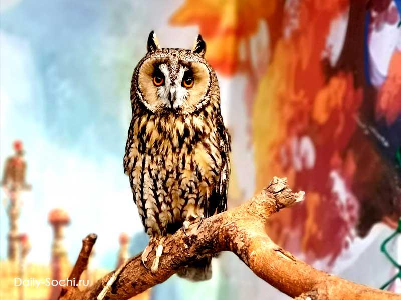 Ушастая сова в Совариуме Сочи